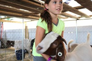 Bailey Snyder, 8, climbs into the stall with her two goats, Wesley and Cocoa. (By Leisel Kober)